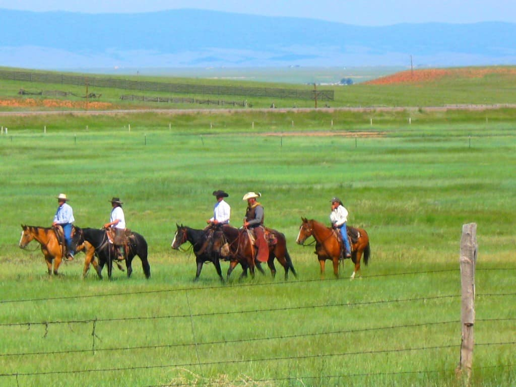 cowboys by fence3