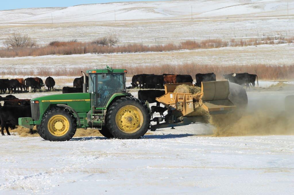 Cliff's boss - feedin hay.
