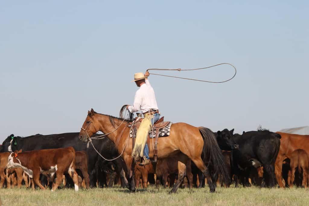 buckaroo roping