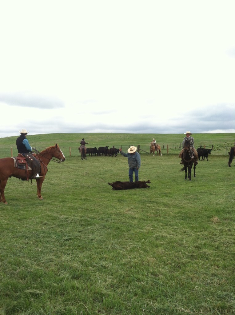 Wyoming Ranch Branding