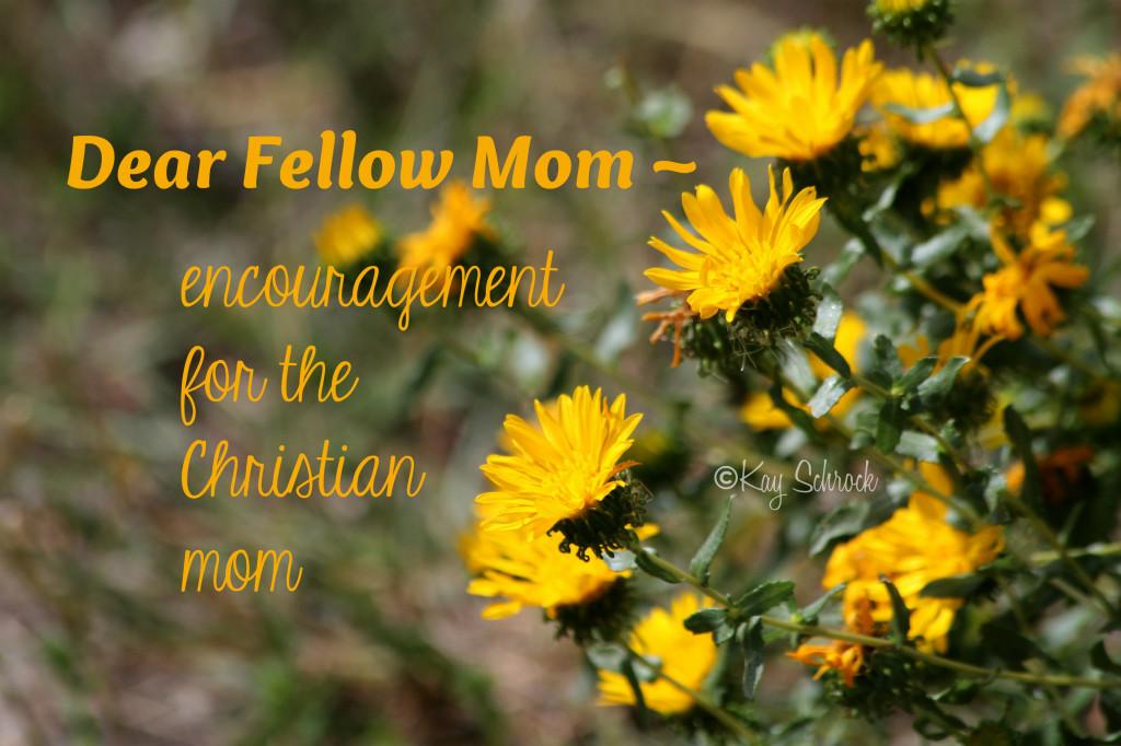 dear fellow mom