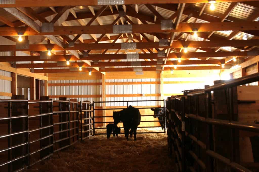 heifer barn