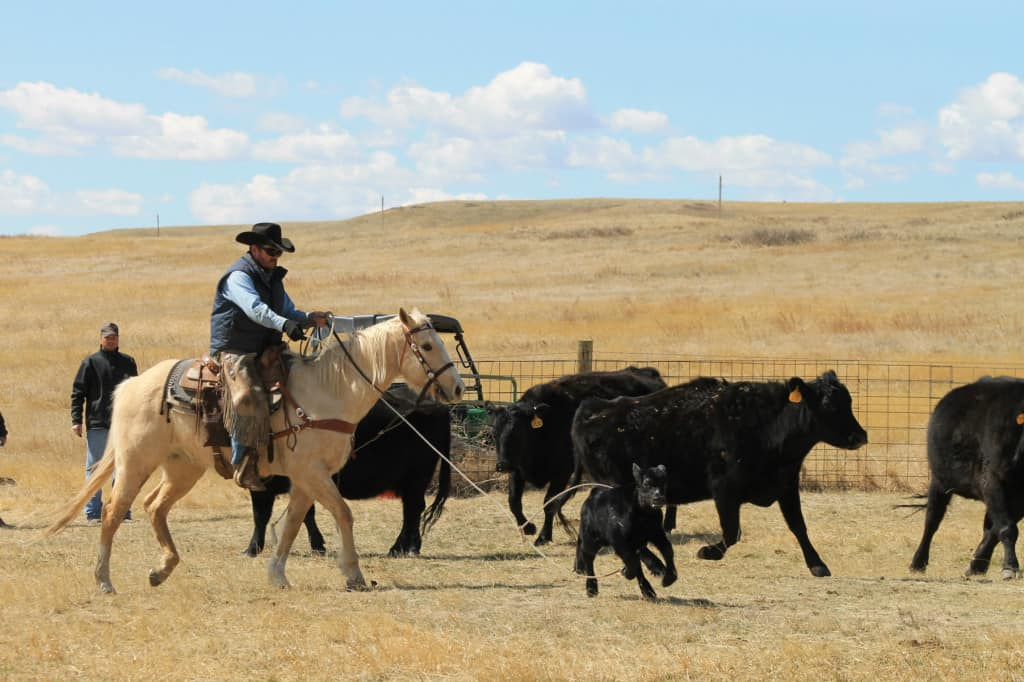 cowboys on the ranch