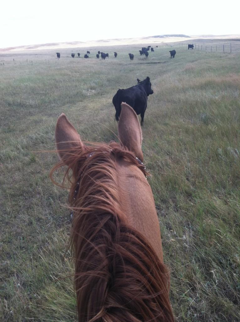 riding through pairs