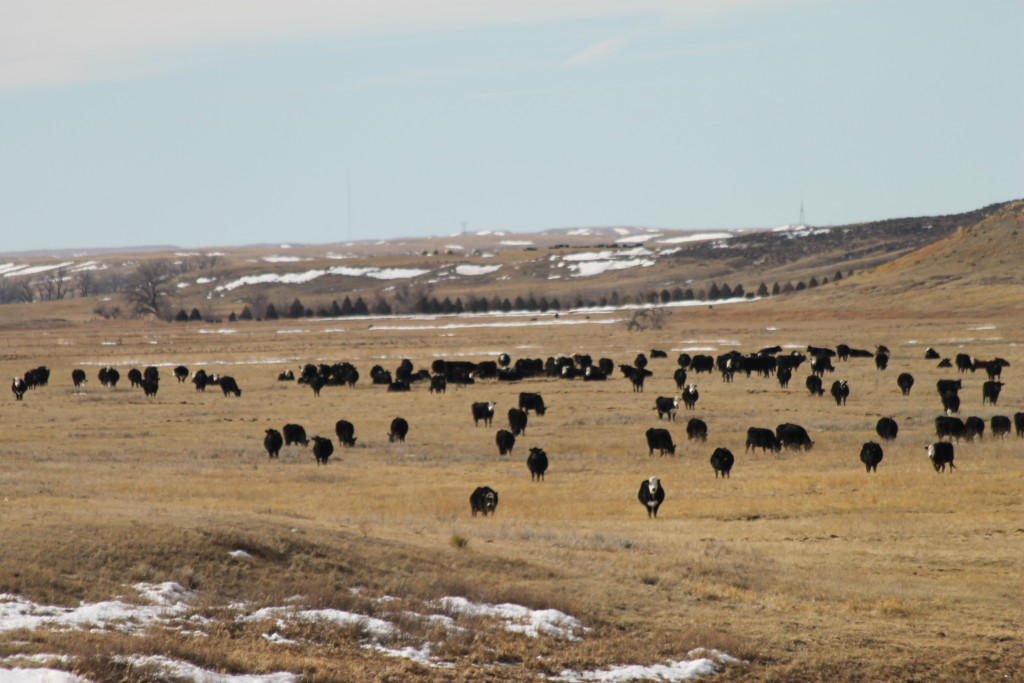 February in Wyoming