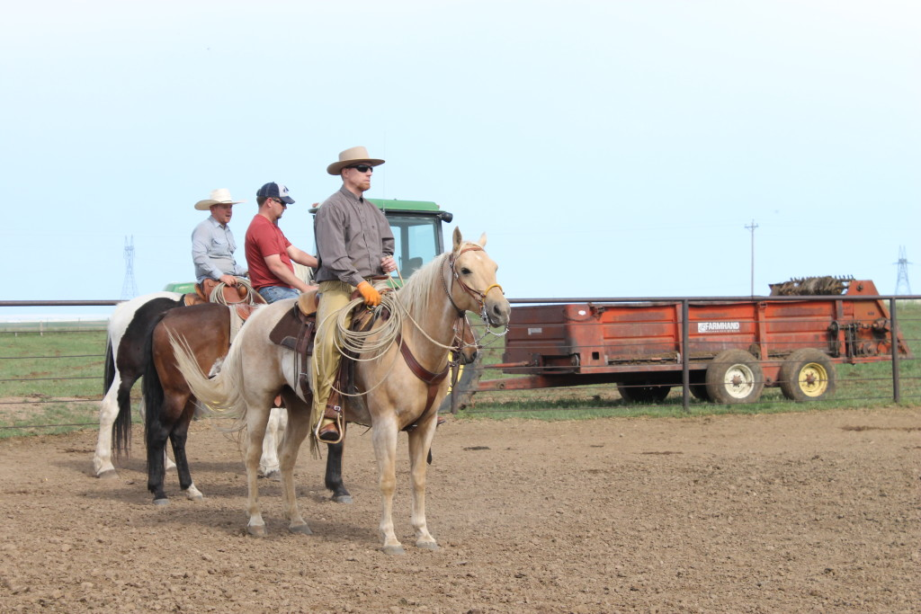 Waiting for their turn in the branding pen.