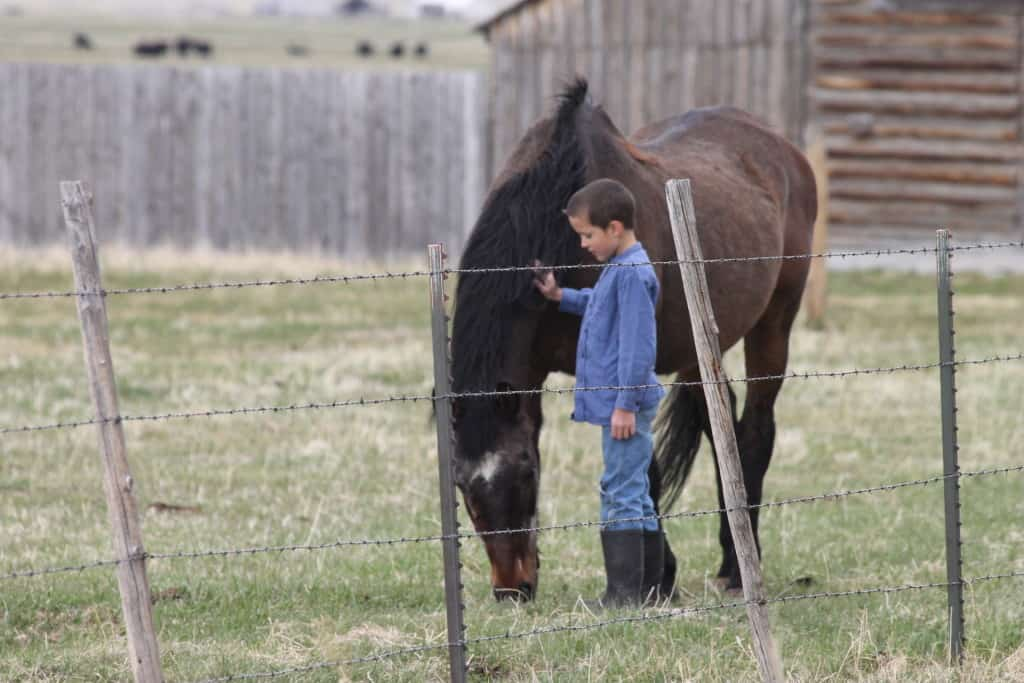 My son with the first kids' horse we owned.