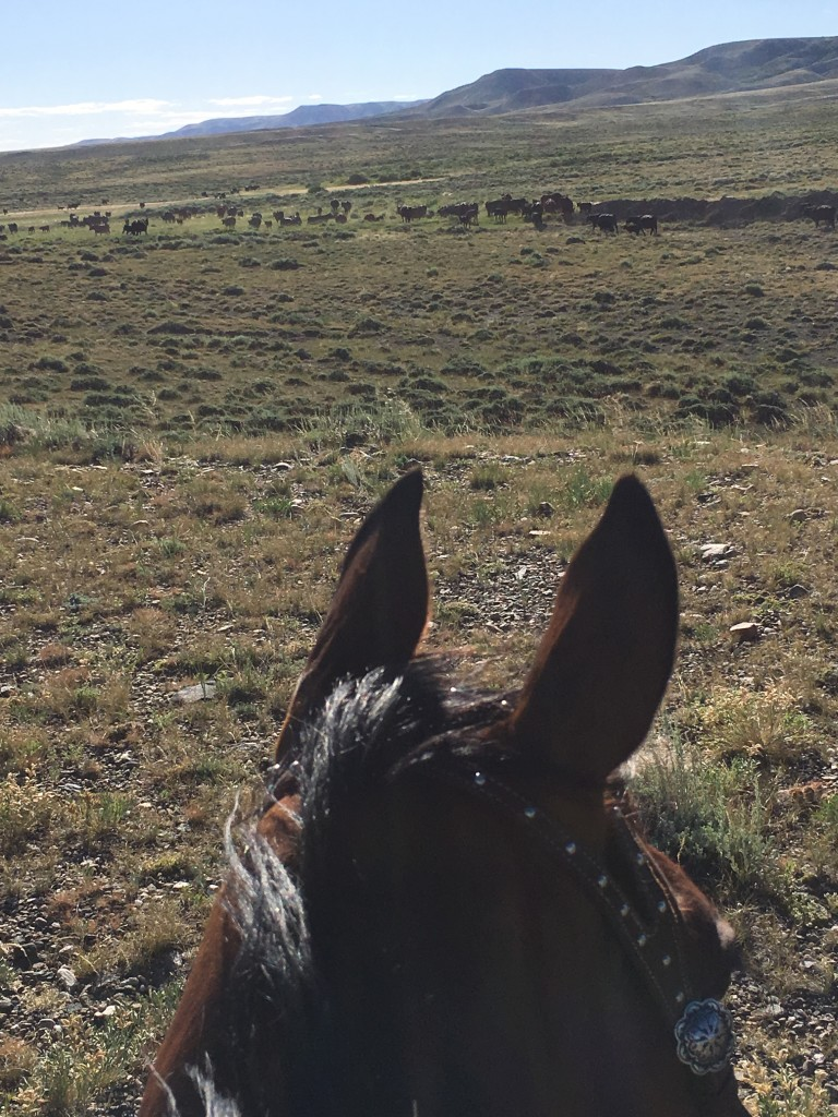 horseback in wyoming