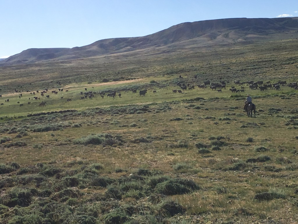 wyoming cattle country