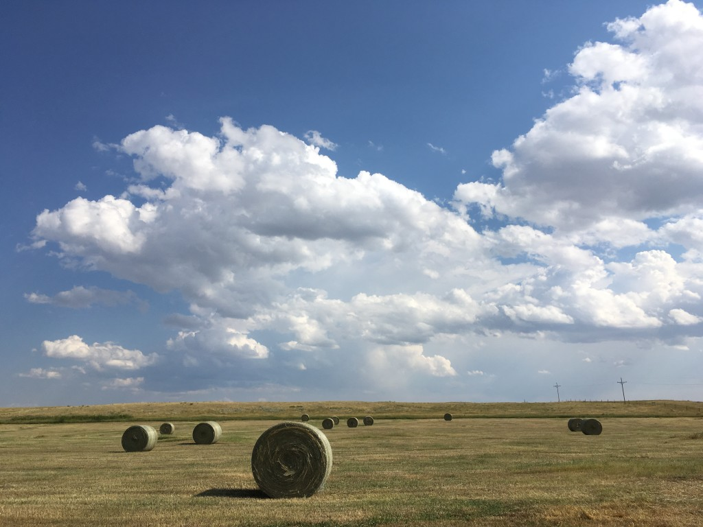 Round bales on the ranch.