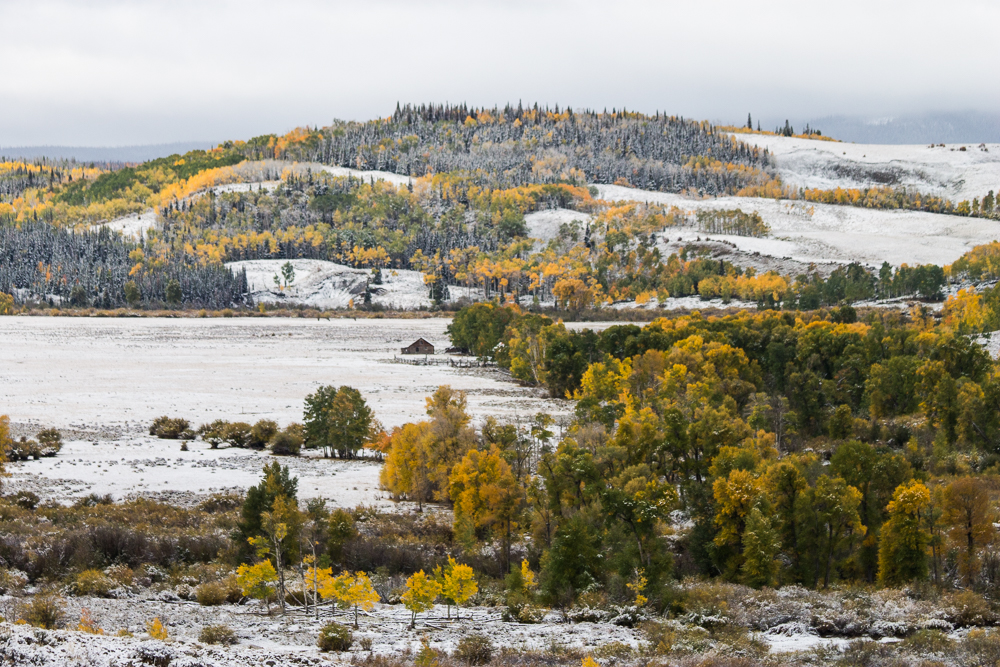 snow on aspens
