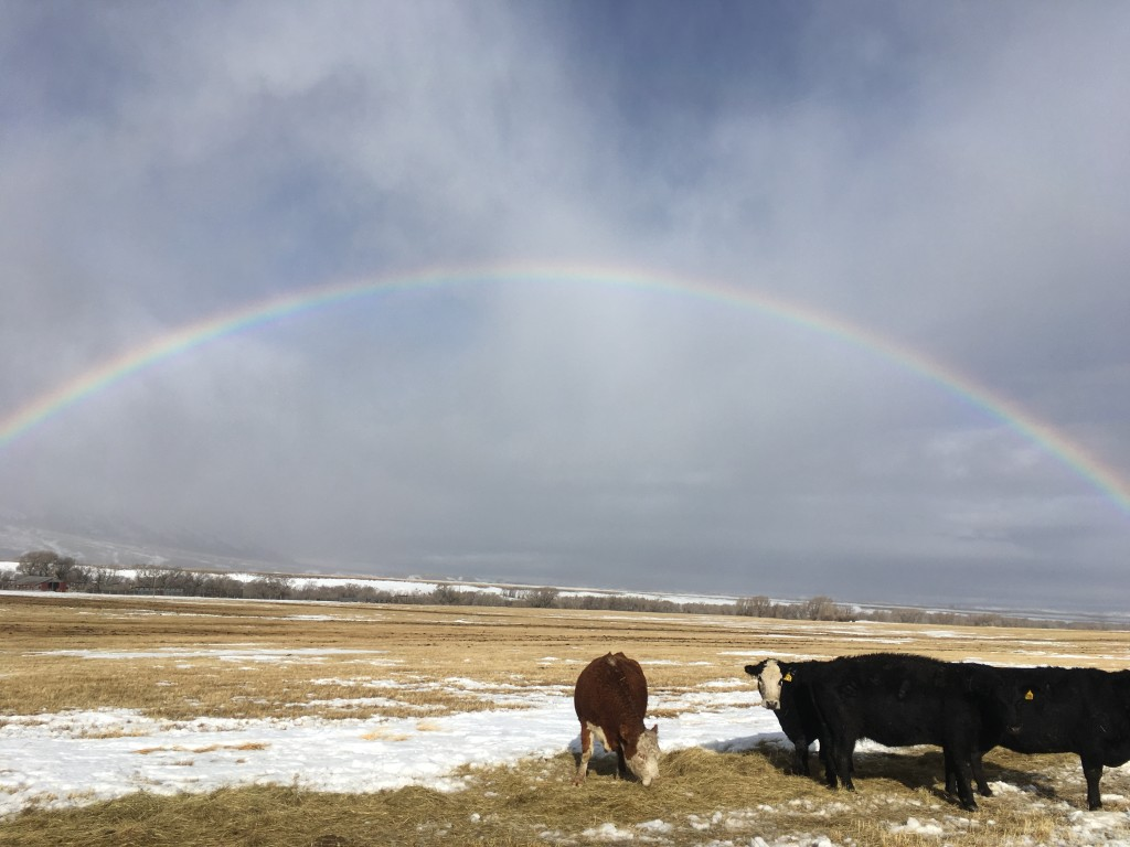 rainbow over ranch country