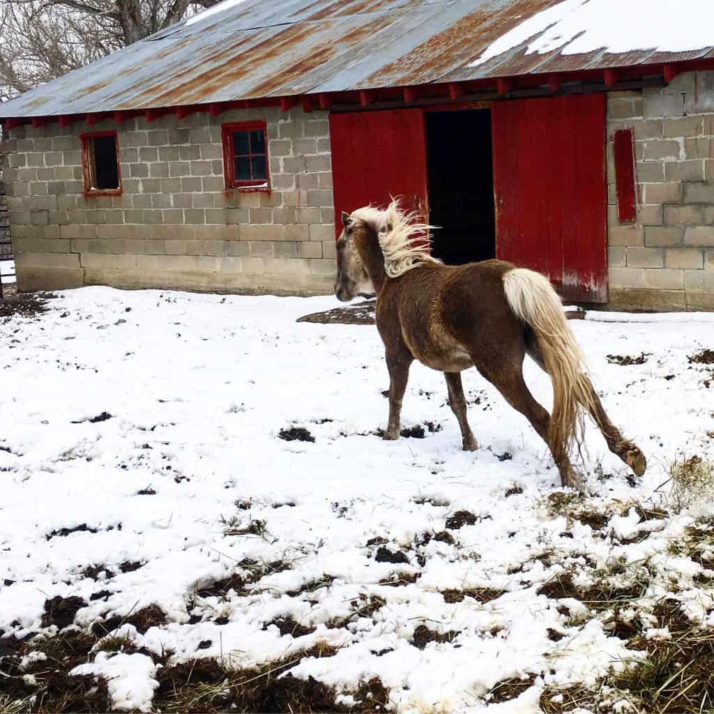 My daughter's pony.