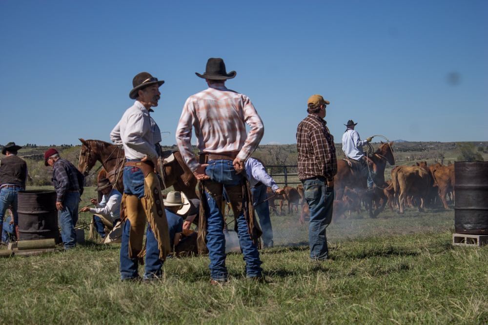 cowboys at a wyoming branding