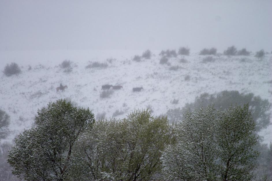 Wyoming spring storm 17-2