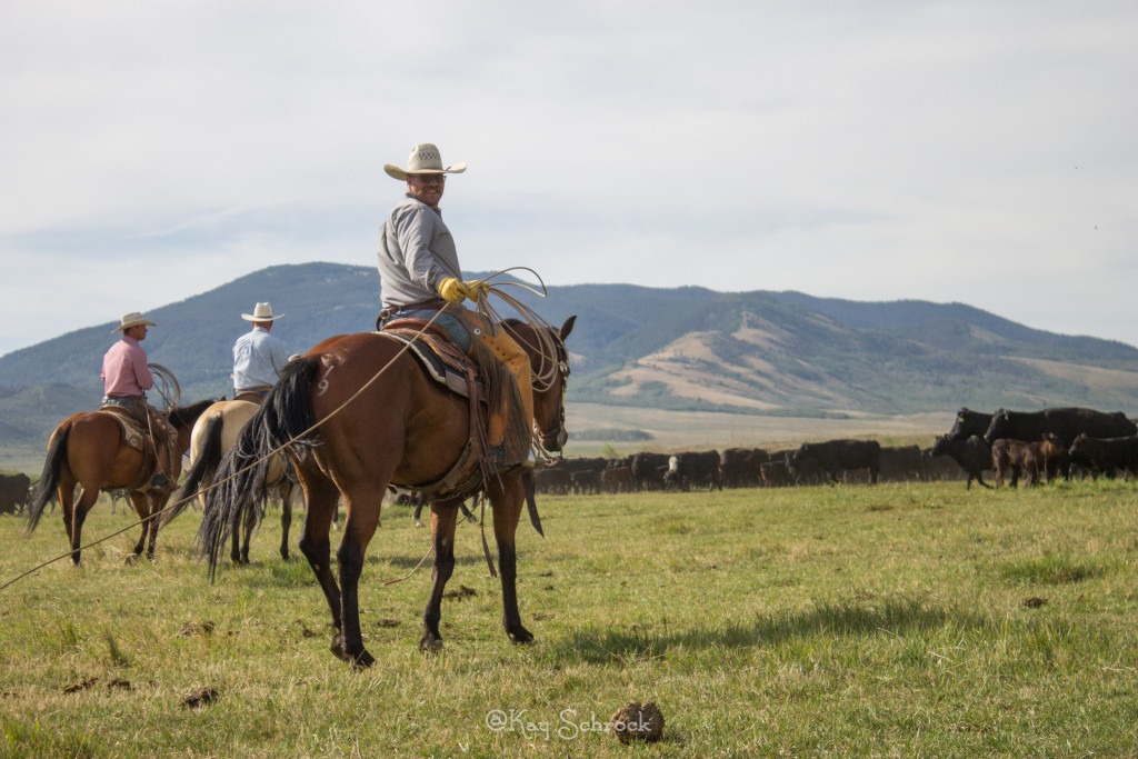cowboy at the TA Branding