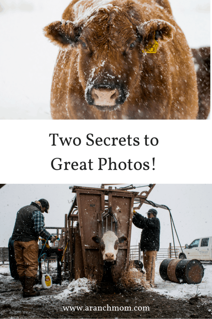 Two Secrets to Great Photosand preg-checking on the ranch
