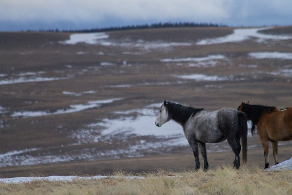 The world needs moms who stay home -- gray horse on winter prairie