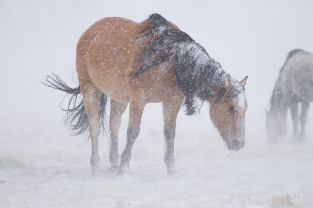 Set your affairs in order (snowstorm blizzard horse)