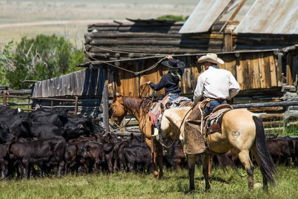 How to be a real cowboy when you have no experience. Find a ranch job. Learn to cowboy.