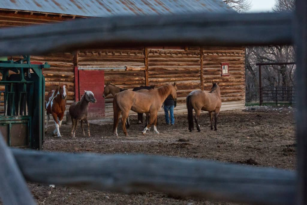 Mornings on the ranch - horses