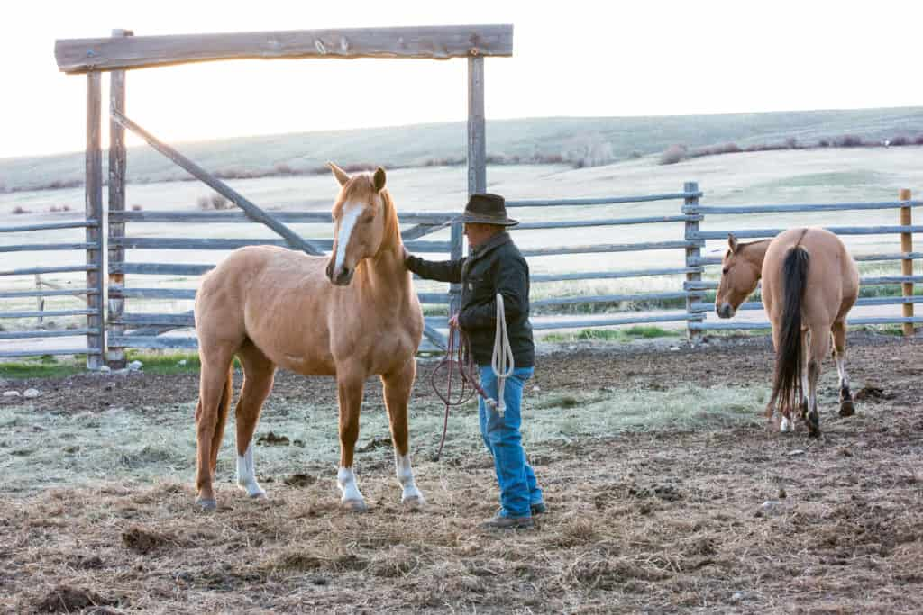 Mornings on the ranch - catching horses