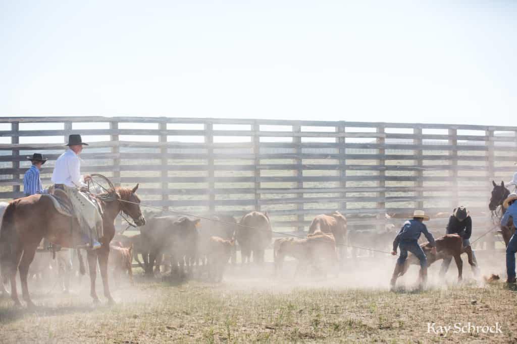 cowboys at branding