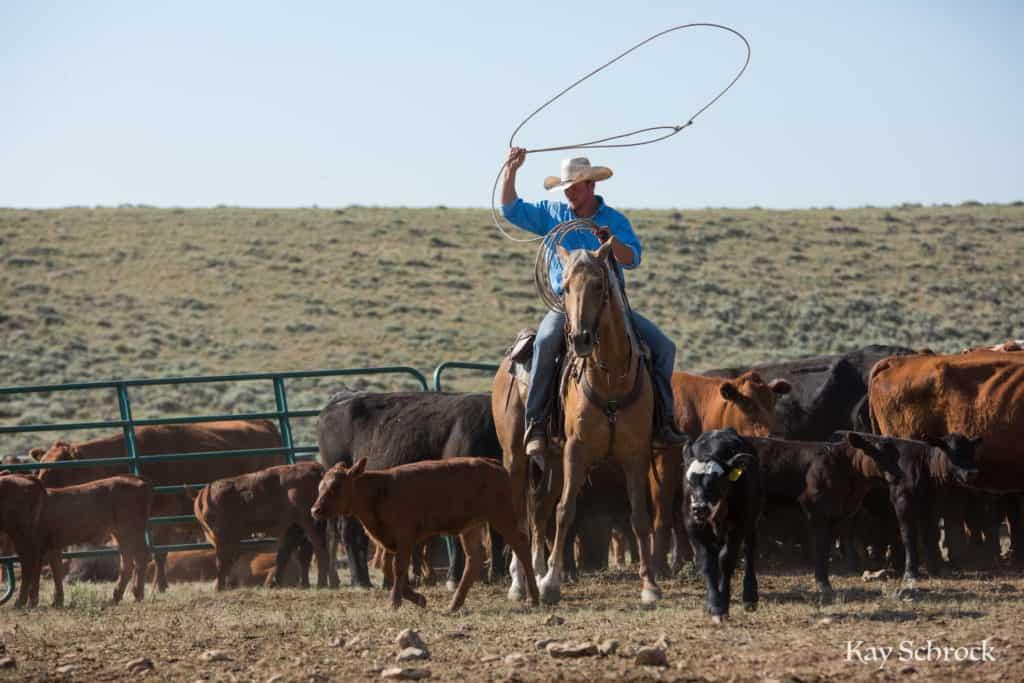 july branding; cowboy roping