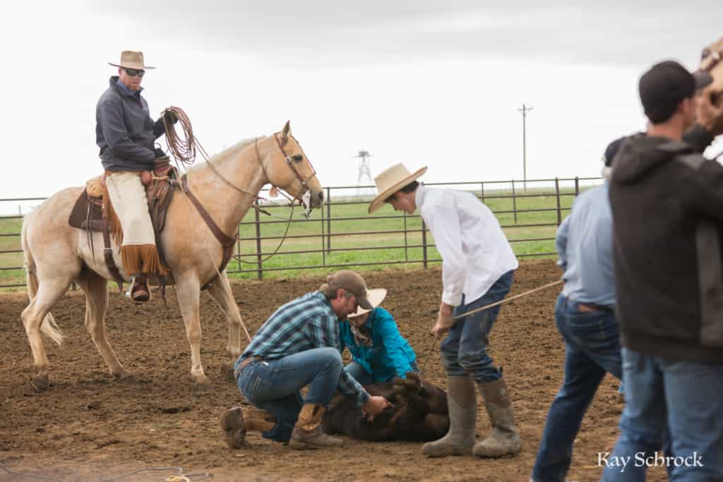 Esh Branding in Colorado - cowboy castrating a bull calf