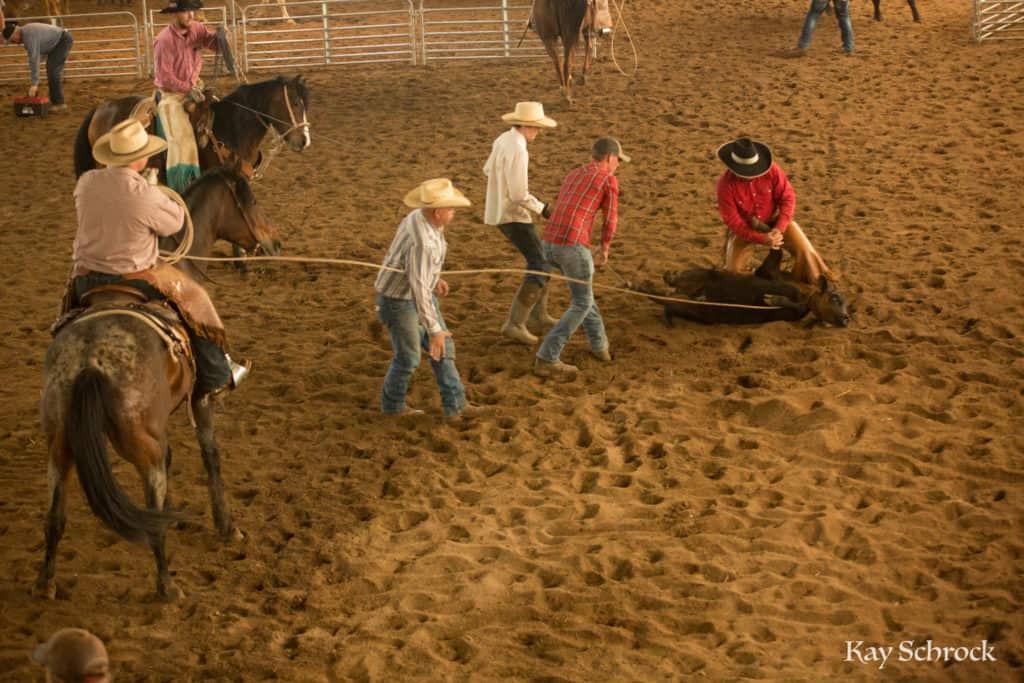 Esh Branding in Colorado - branding a calf