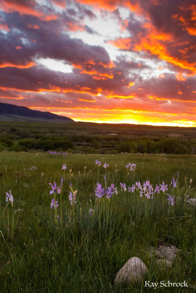 Sunsets and wild iris.