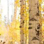 Aspen Alley in pictures