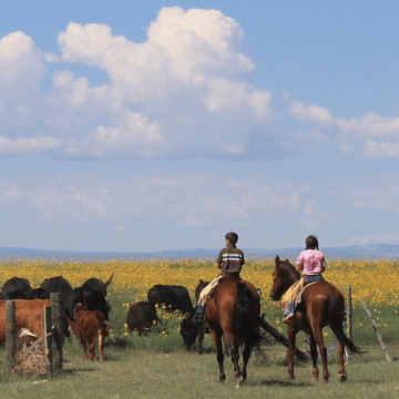 two kids horseback, rounding up cows