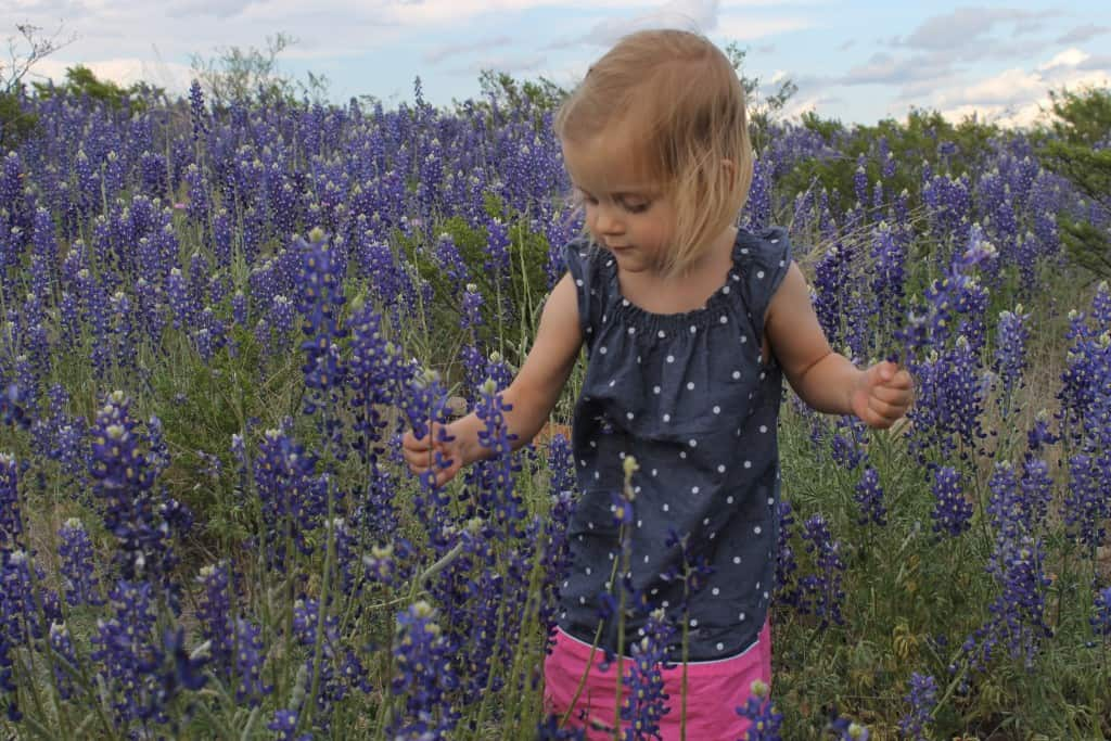small girl in field of Texas bluebonnets
