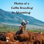 Spring Branding In Wyoming