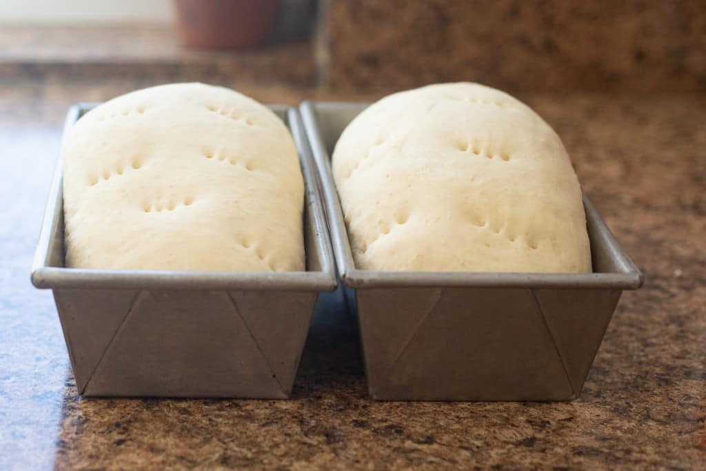 two loaves of bread dough, rising on counter