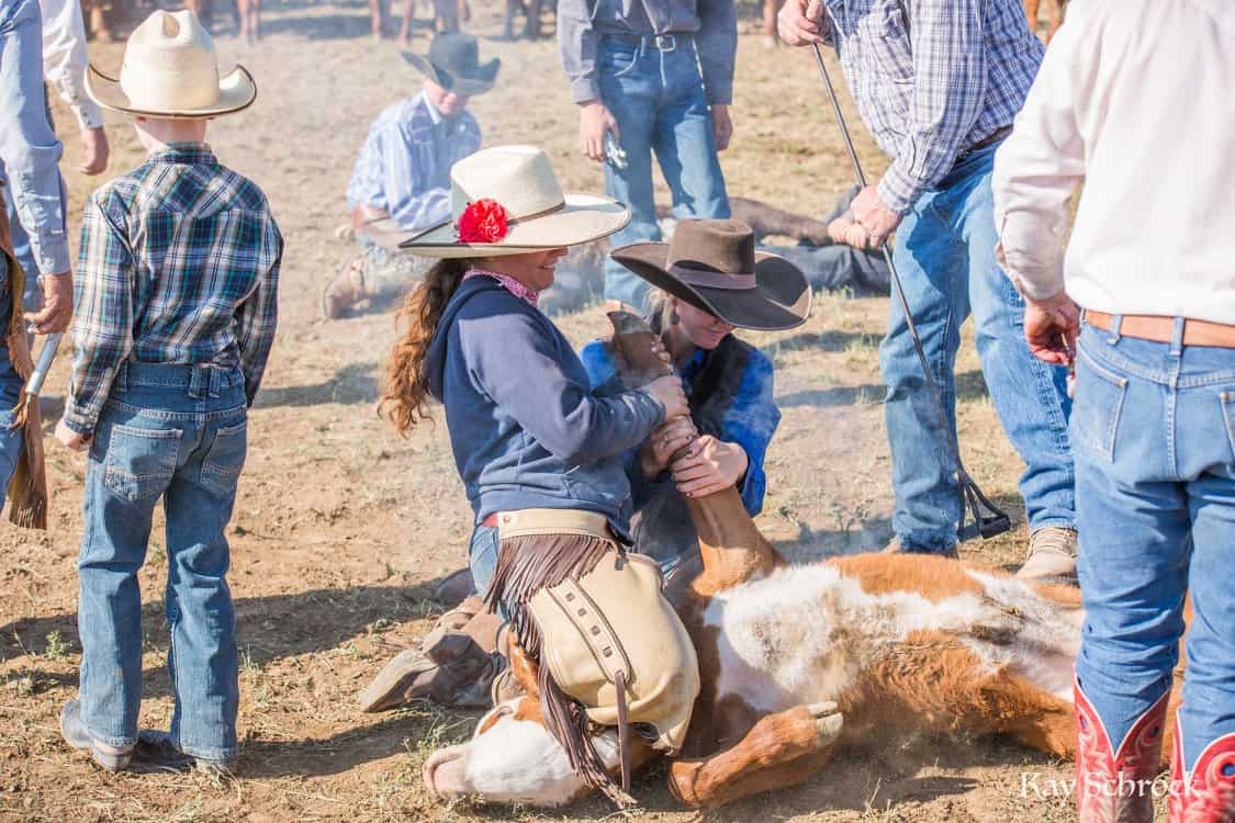 cowgirls holding a calf at a branding