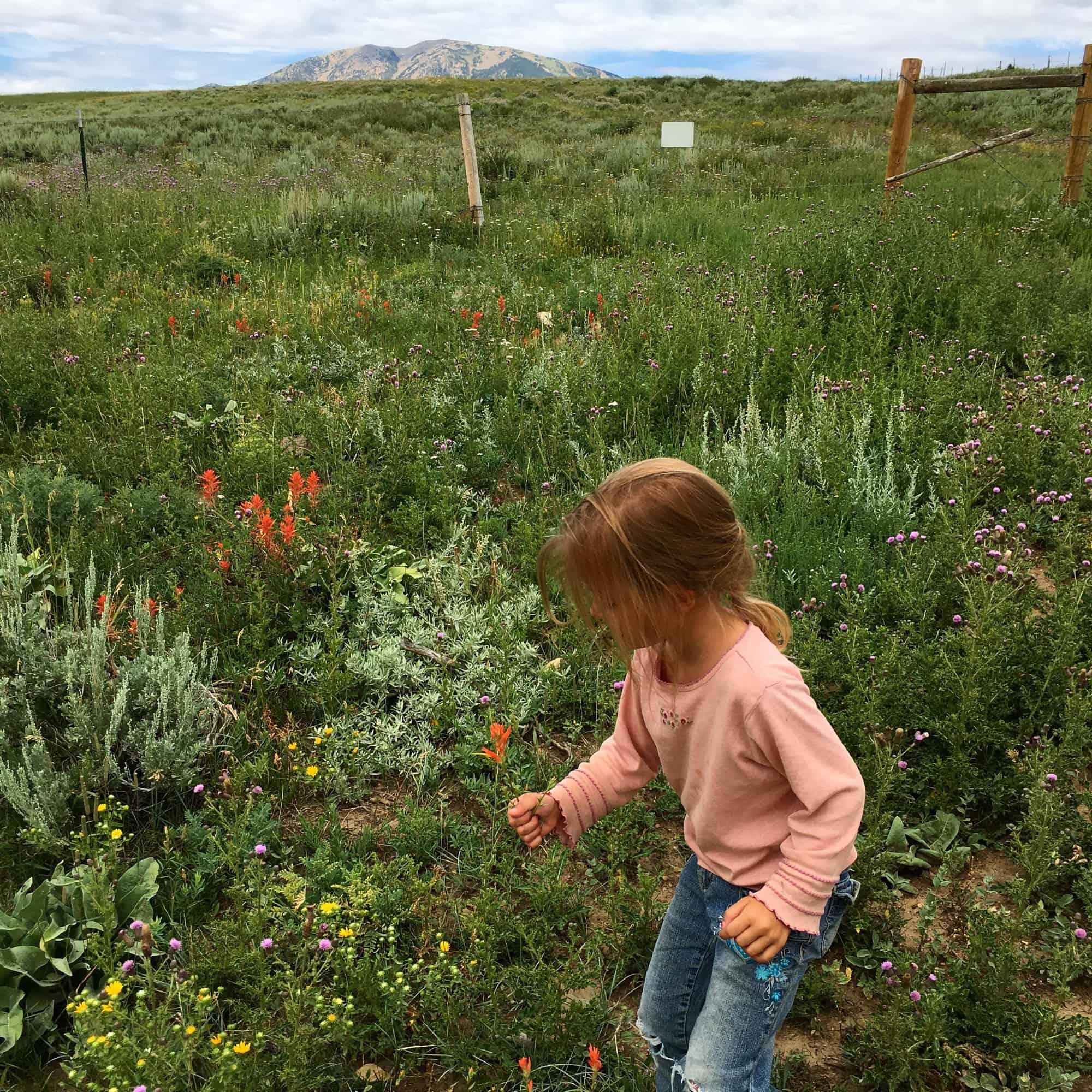 girl picking wildflowers in field